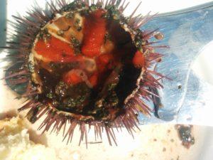 Seeigelschale mit Eiern und Algen