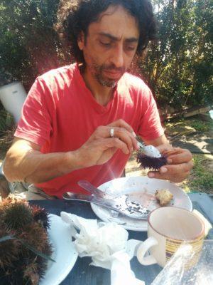 auskratzen des Seeigels mittels eines Teelöffels