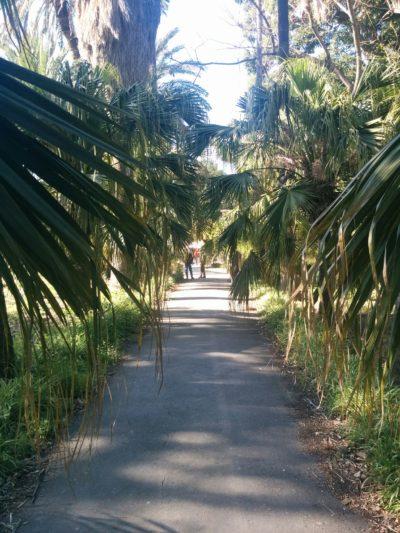 Mit Palmen eingerahmter Weg im Botanischen Garten