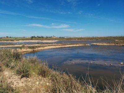 Sumpfgebiet am Capo Feto mit Wasserbecken