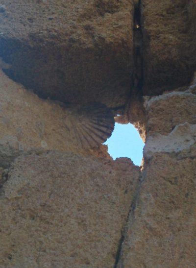 Muschel im Tuffstein eingeschlossen