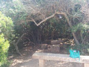 Romantische Baumhöle auf der Insel San Pantaleo