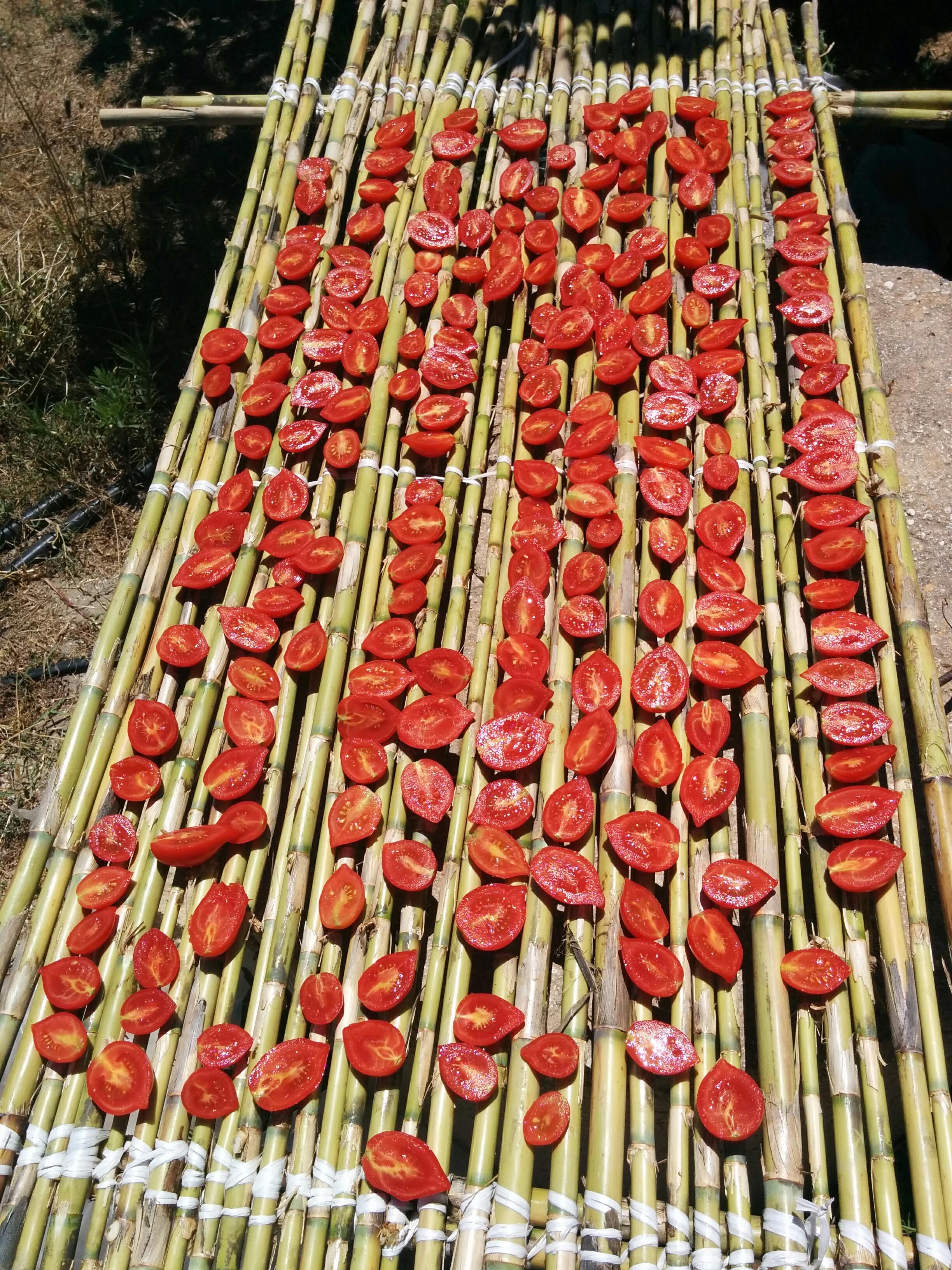 Tomaten zum trocknen ausgelegt