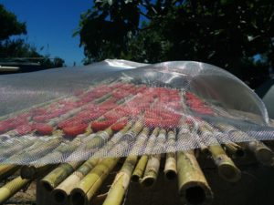 Fliegengitter als Schutz gegen Insekten