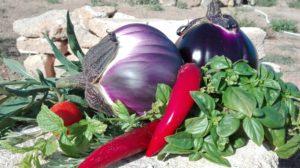 Gemüse aus meinem Garten