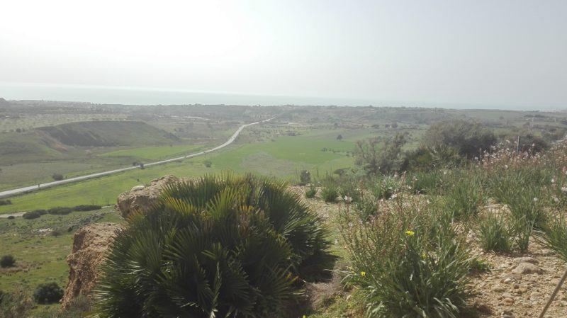 Im Winter sind auch hier die Wiesen grün. Hier bei Agrigento mit Blick aufs Meer.