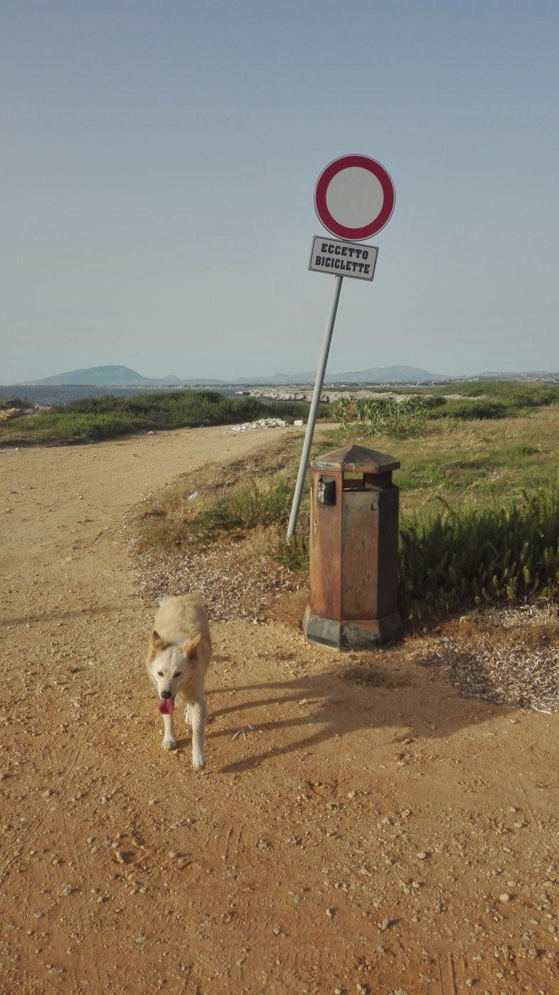 Eigentlich steht das Schild für Durchfahrt verboten, ausgenommen Fahrräder. Aber der Müll im Hintergrund sagt etwas anderes
